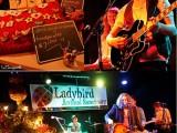 Ladybird fundraiser poster